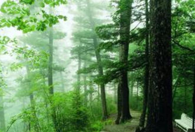 五营森林公园-(5)